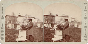 Stereoview of Canterbury, NH Shaker Village - The Apiary.