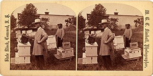 Stereoview of Canterbury, NH Shaker Village - The hives and honey bees.