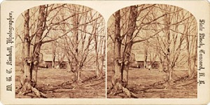Stereoview of Canterbury, NH Shaker Village - Among the Trees.