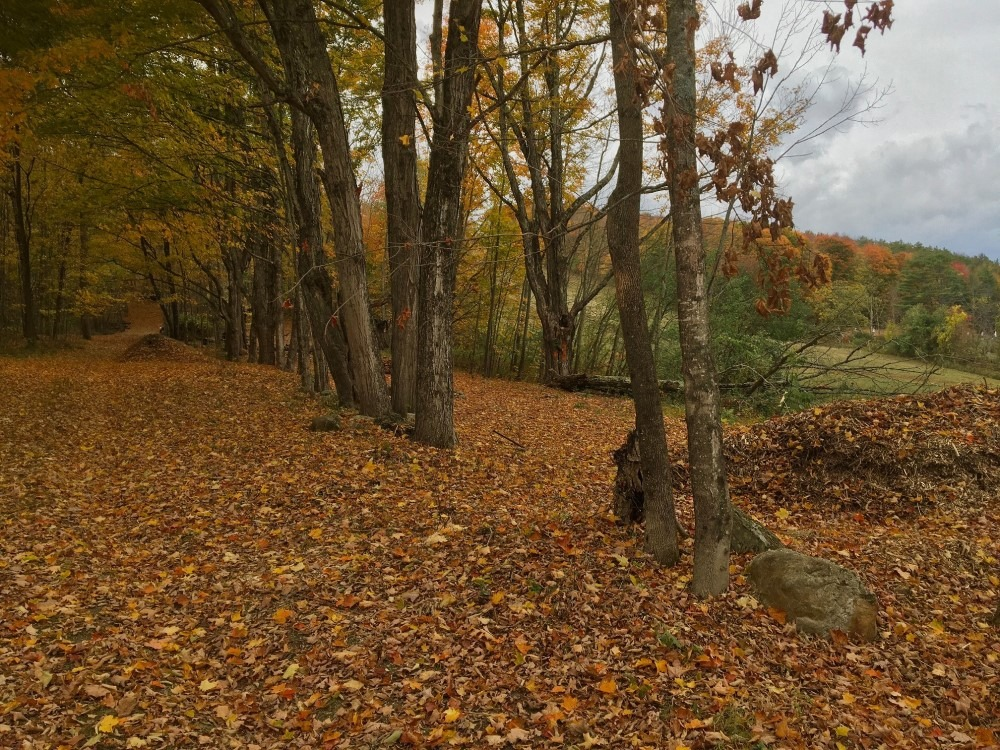 Fall in the Alley, Shaker Mountain